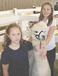 Alpaca grey with daughters