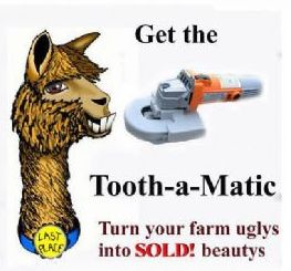 tooth a matic