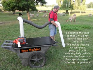 Bean Machine alpaca pasture vac